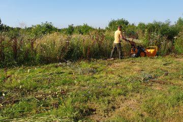 Defrisare Vegetatie Spontana