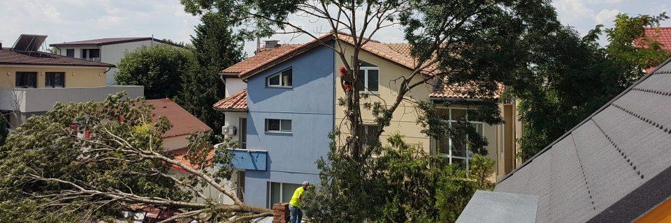 Apelati la specialistii nostri pentru defrisari de arbori de urgenta, copaci cazuti etc.