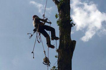 Defrisari arbori