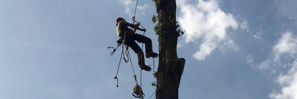 Defrisari arbori cu alpinist utilitar