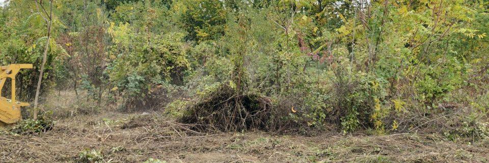 Defrisare vegetatie teren Bucuresti